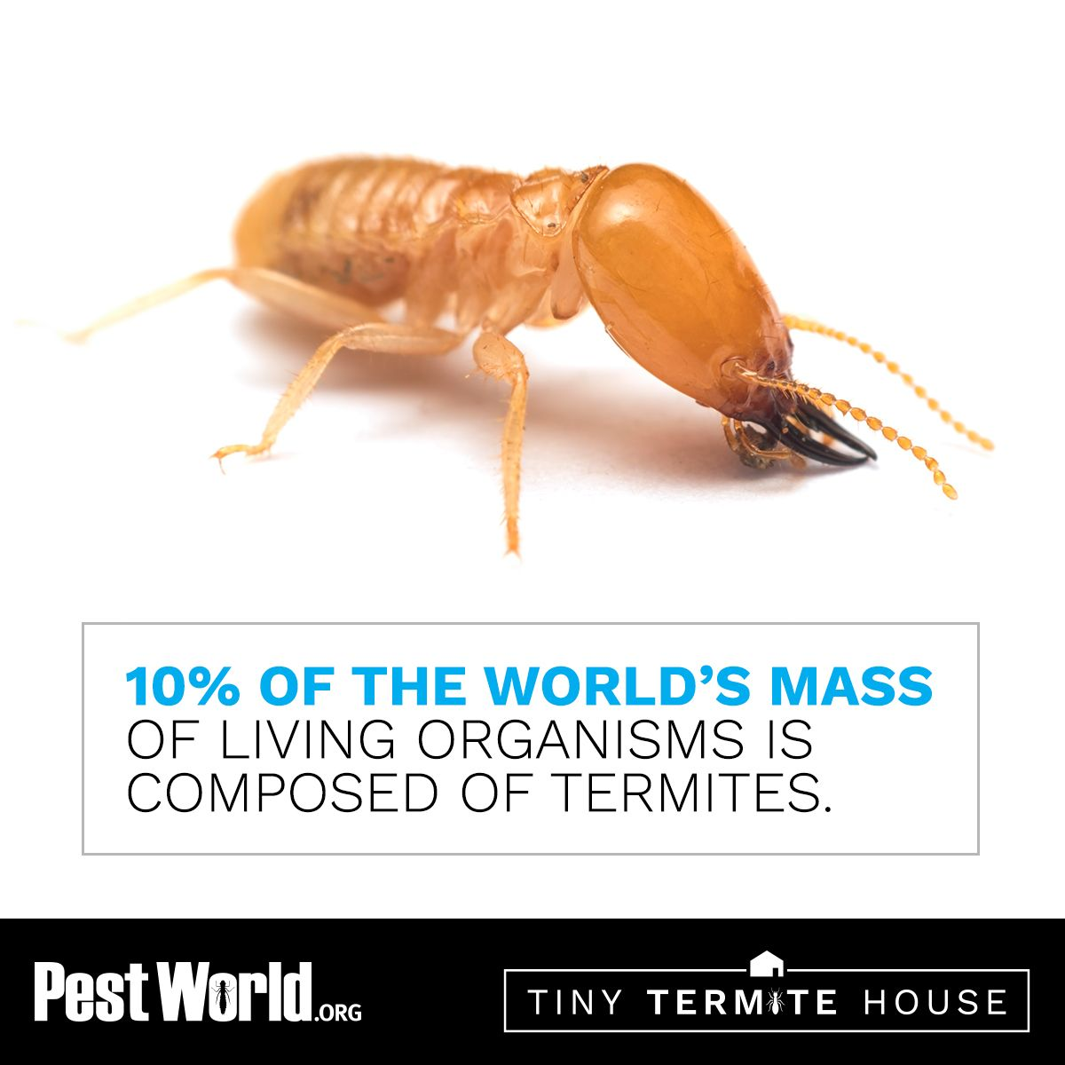 The world is full of termites don't let your house be