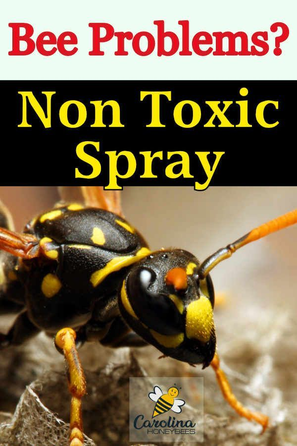 How to Get Rid of Bees   Getting rid of bees, Bee spray, Bee