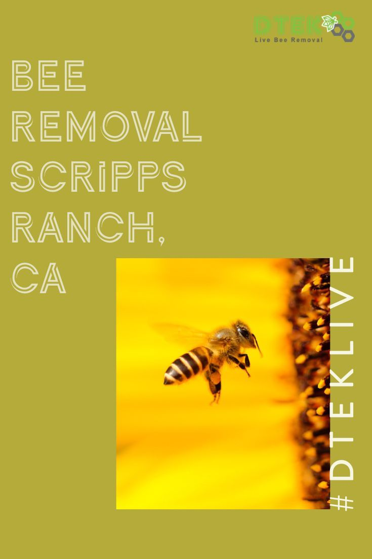 Do You Live In Scripps Ranch And Have A Bee Swarm Give The Experts At D Tek Live Bee Removal A Call Today We Can Permanently Solv Bee Removal Bee Problem Bee
