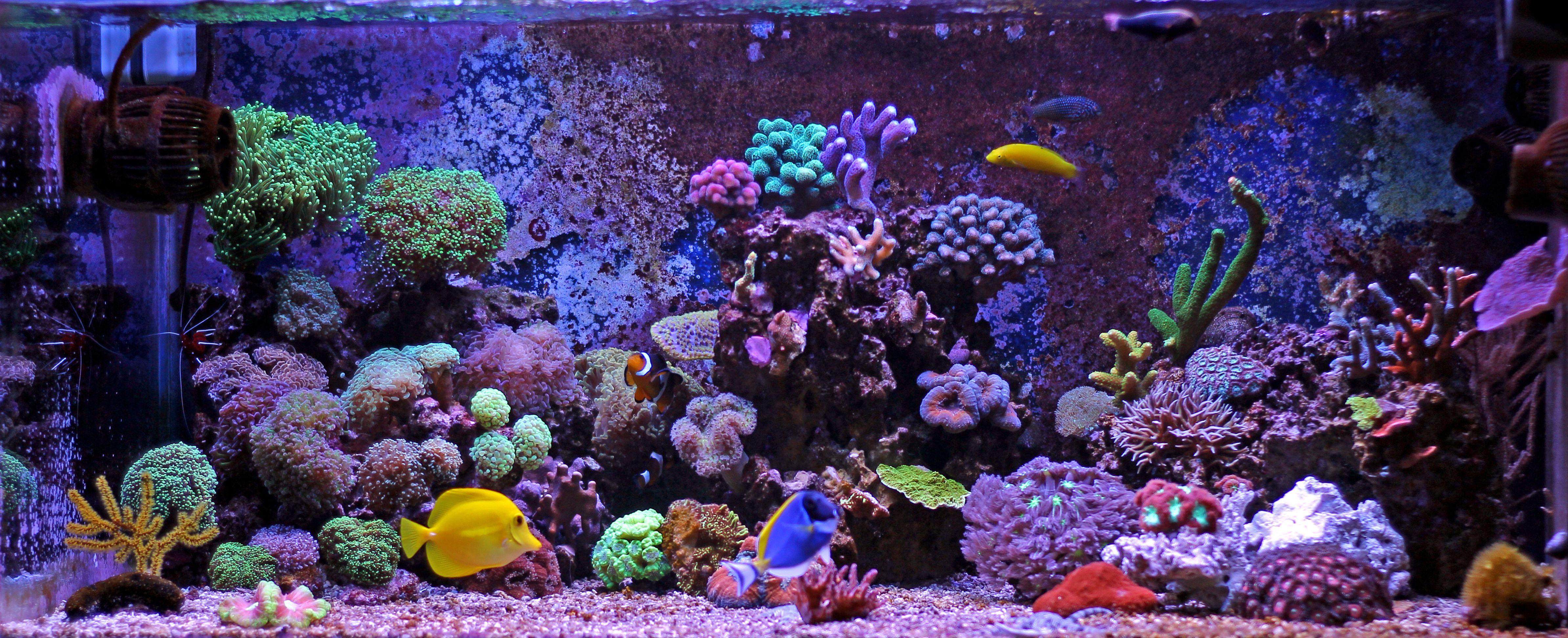 7 Best Led Aquarium Light Buyers Guide Coral Reef Aquarium Reef Aquarium Aquarium