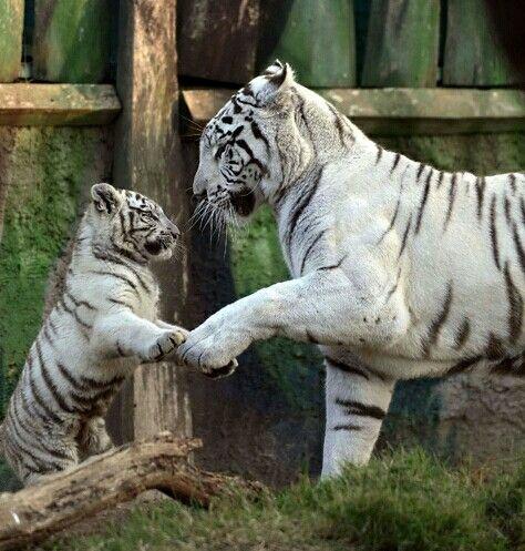 Mum & cub .....