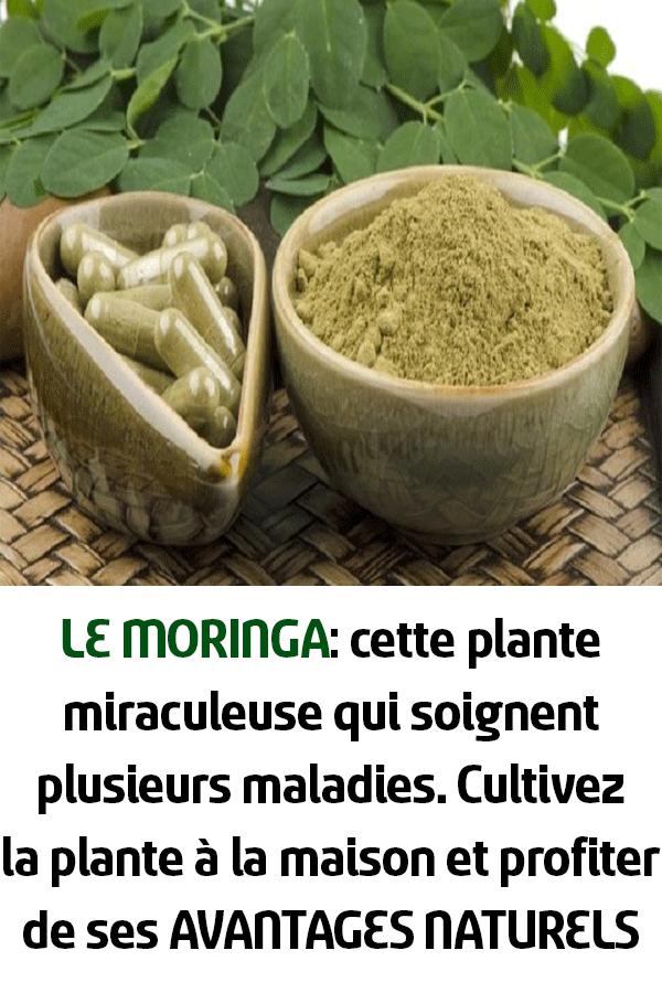 LE MORINGA: cette plante miraculeuse qui soignent ...