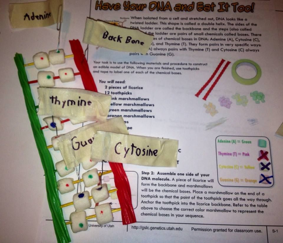 My post on creating the candy model of DNA, including the ...