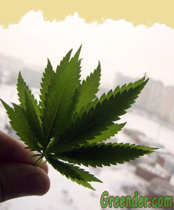 Документальный фильм марихуане i марихуана добрая