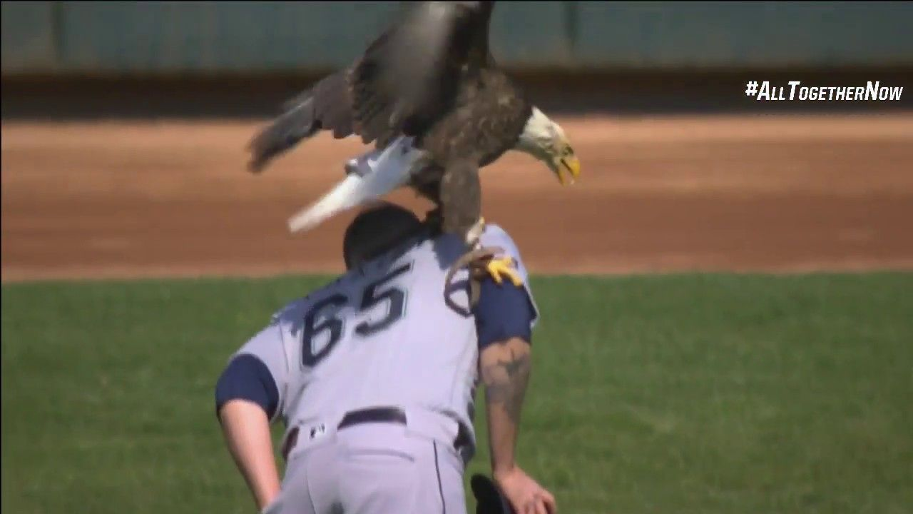 Bald eagle lands on Mariners' Paxton at Twins game Fox