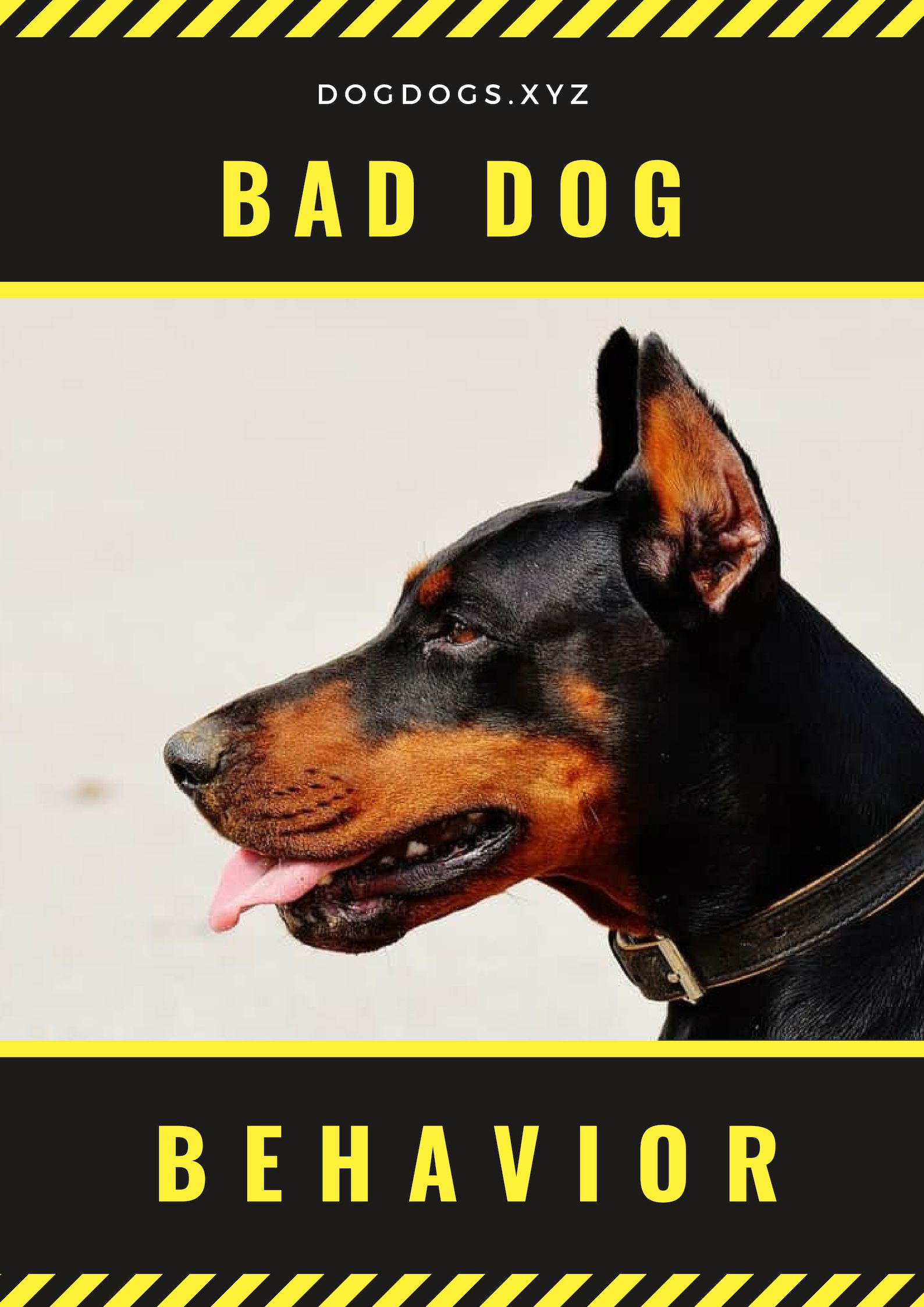 Bad Dog Behavior Needs To Be Remedied Within Period In Order To