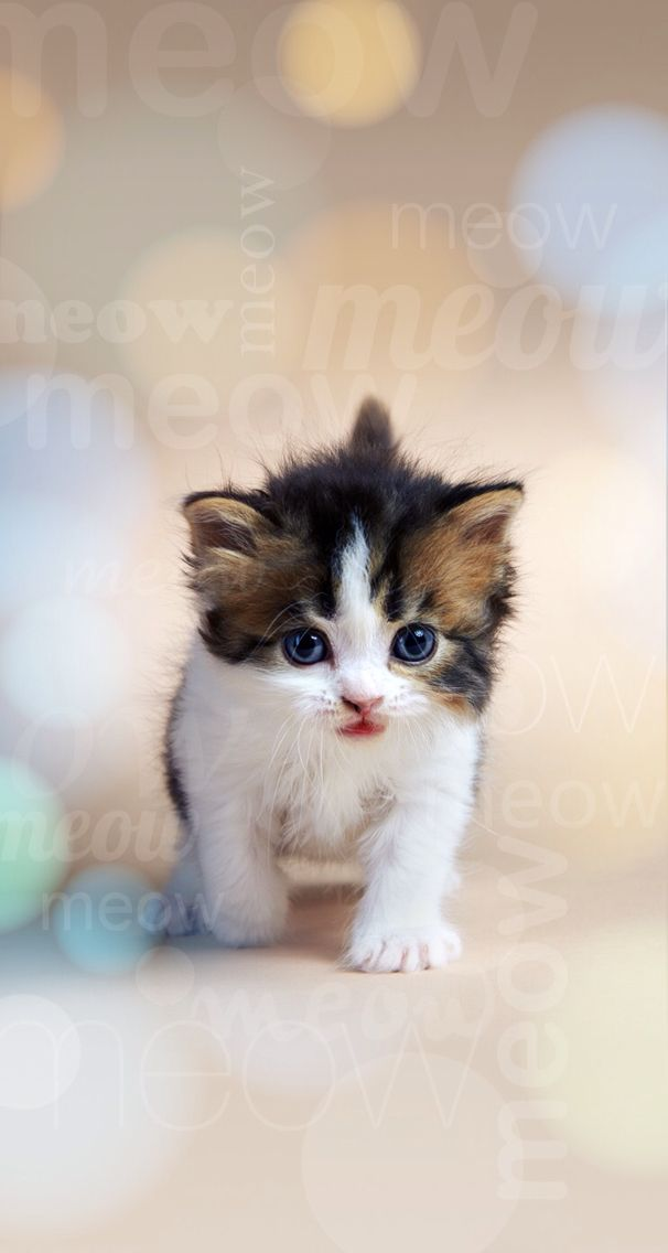 Pin By Marie Vd On Dogs Cats Animals Baby Animals Cats And Kittens