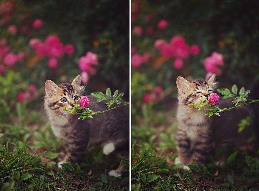 Animais cheirando flores (2)