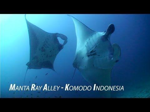 Manta Alley Komodo Indonesia Amazing Hd Footage Manta Raya Mantas