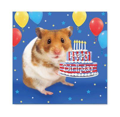 Birthday Funny Birthday Cards Birthday Humor Birthday Cards
