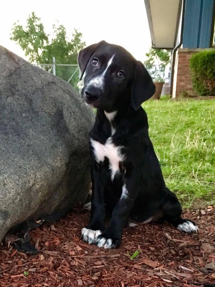 Adopt Captain Crunch On Petfinder Mans Best Friend Labrador Retriever Mix Animal Rescue