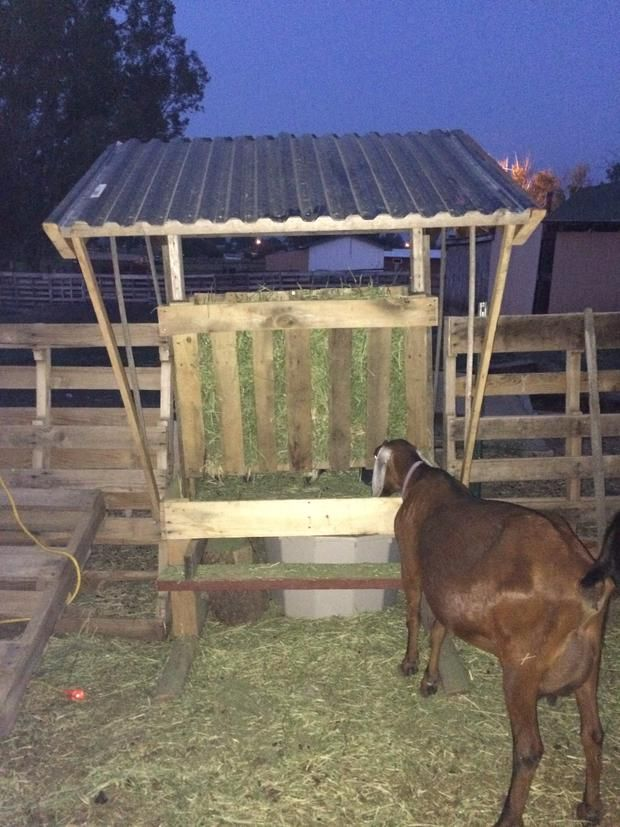 livestock quality rack grain goat with racks feeders affordable sydell experienced hay large sheep feeder mangers