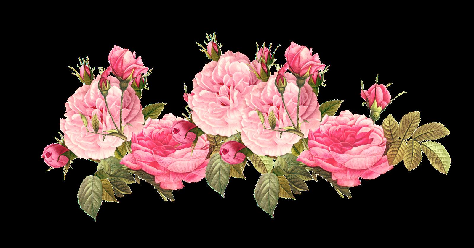 Vintage Rose Boarder Meinlilapark Pink Roses Background Vintage Roses Flower Clipart