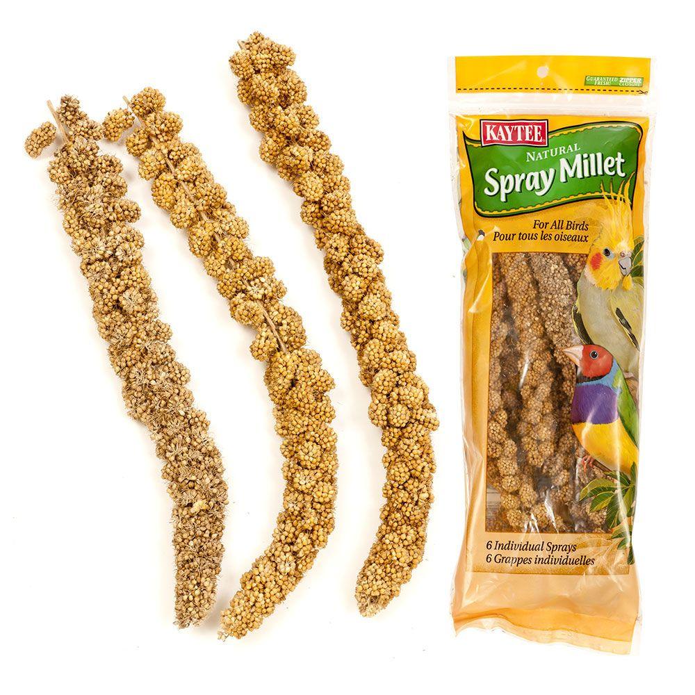Millet Bird Seed For Sale Bird Seed Millet Bird