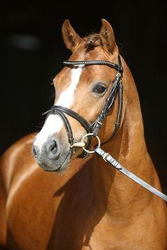 Boiselle Bilddatenbank Horses Pony Horse Photography