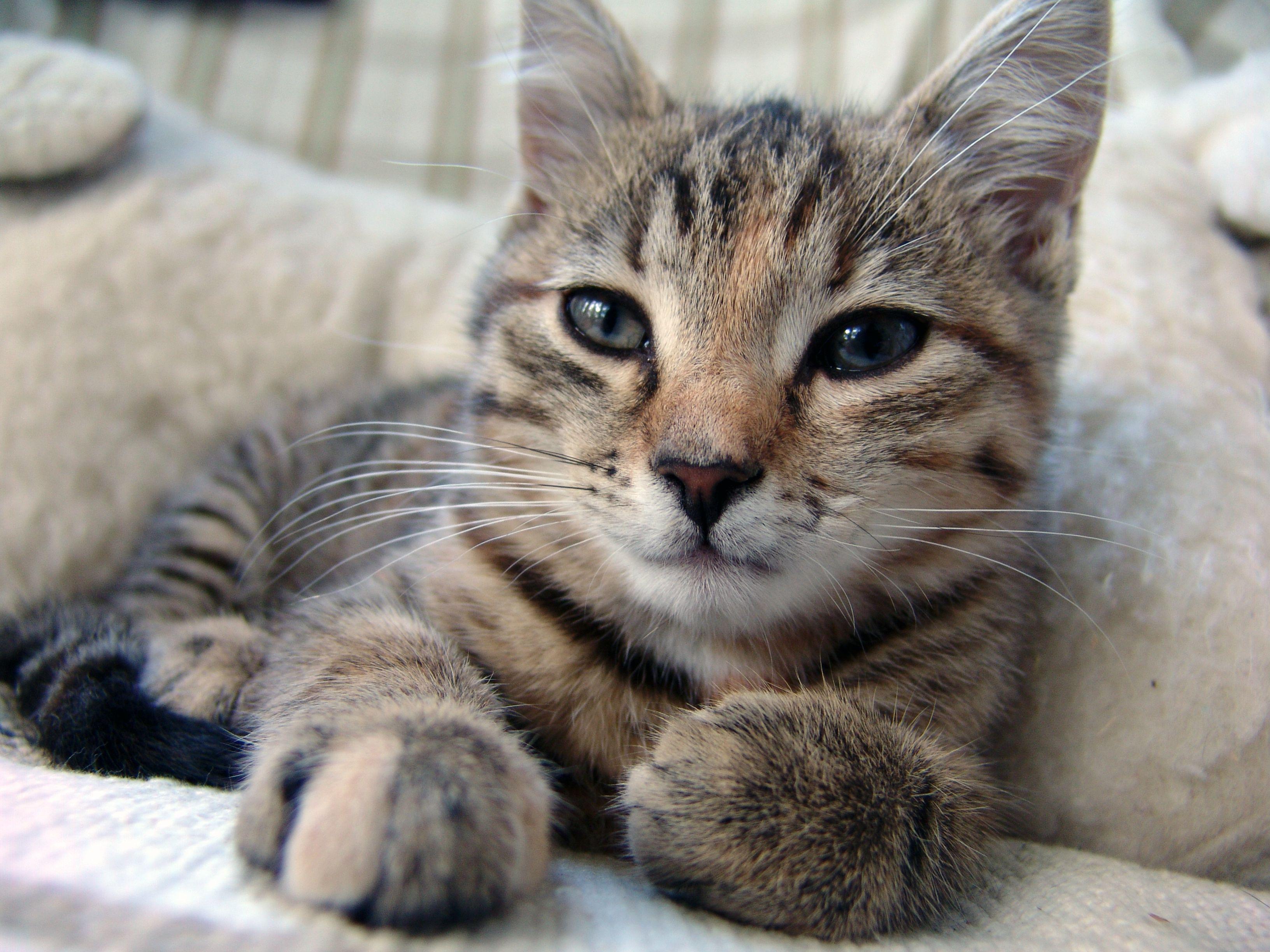 Katze Katze Auf Dem Designersofa Blinde Spiegel Und Zigarettenrauch In Den Cute Cat Quotes Cat Quotes Cats