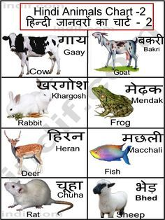 hindi animals chart kindergarten learn hindi hindi. Black Bedroom Furniture Sets. Home Design Ideas