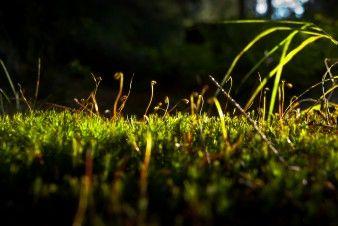 Moos im Wald #Landschaft #Wald #Sonnenstrahl #Grün