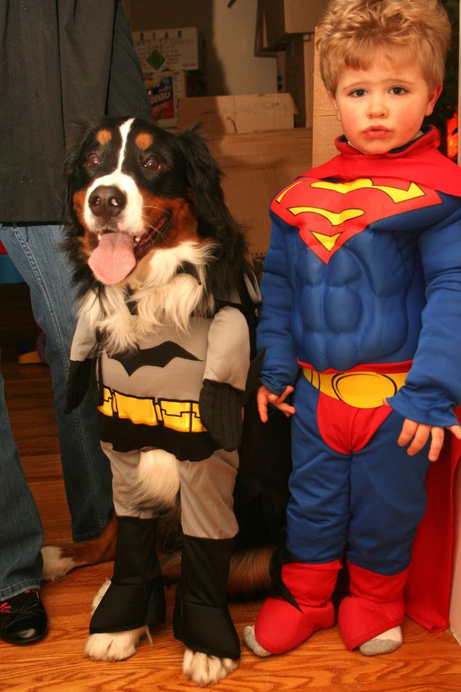 1000+ images about Katelynns Costumes for Teddy on Pinterest