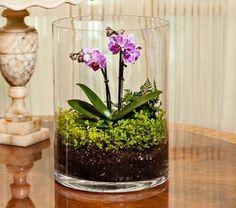 r sultat de recherche d 39 images pour orchid e terrarium jardinage pinterest terrarium. Black Bedroom Furniture Sets. Home Design Ideas