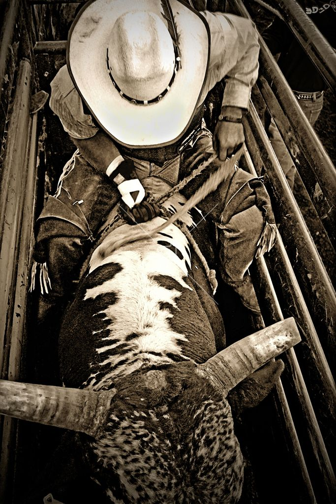 Collection | Bull Rider