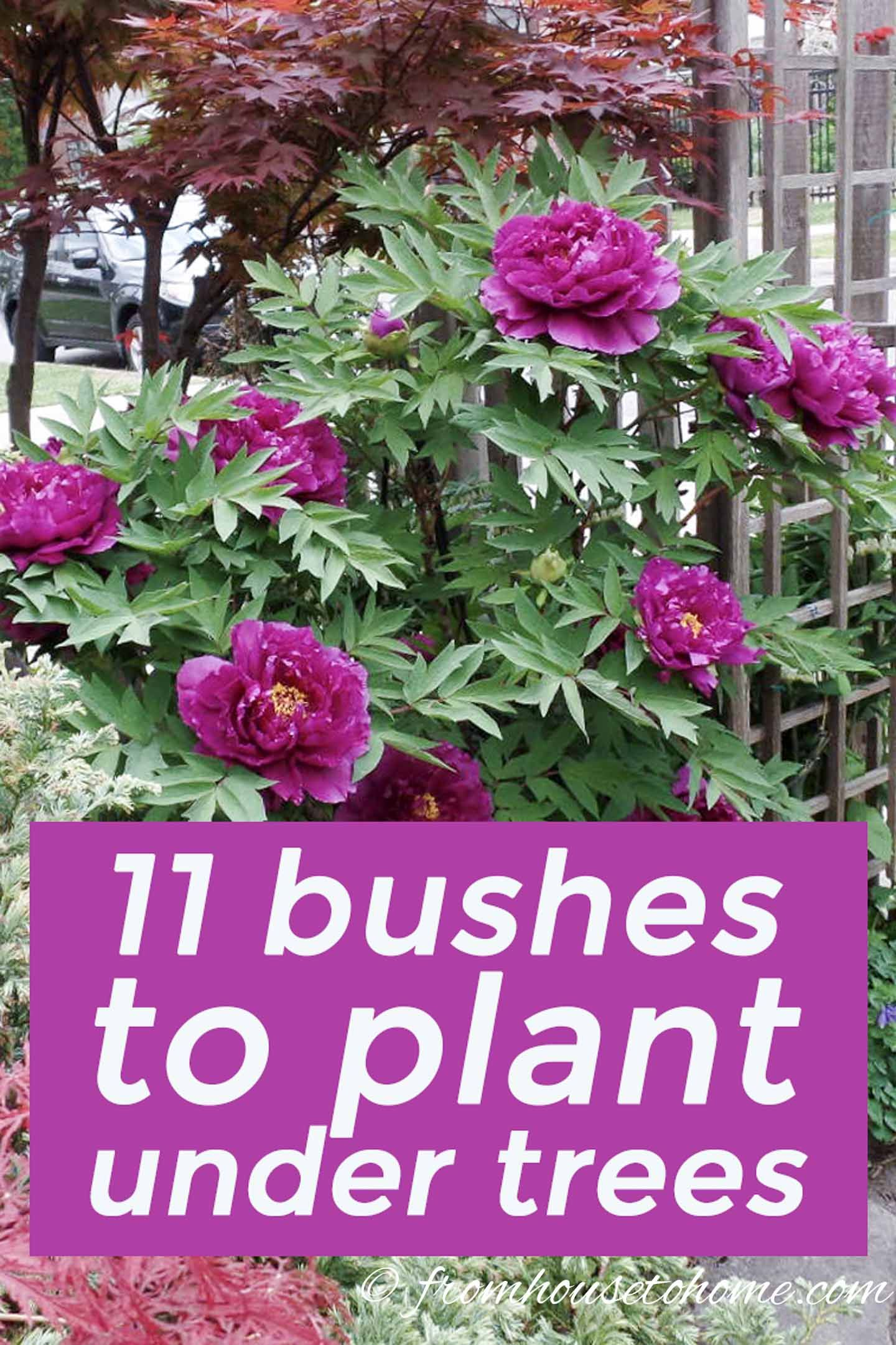 Shade Loving Shrubs: 11 Beautiful Bushes To Plant Under Trees - Gardening @ From House To Home