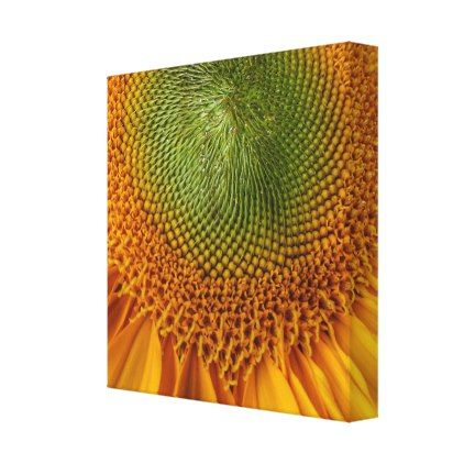 Bright sunflower canvas print image gifts your image here cyo personalize