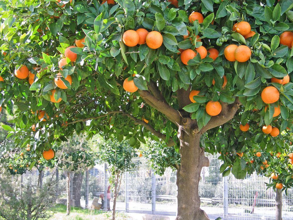 панели фрукты растут на деревьях картинки строгие требования