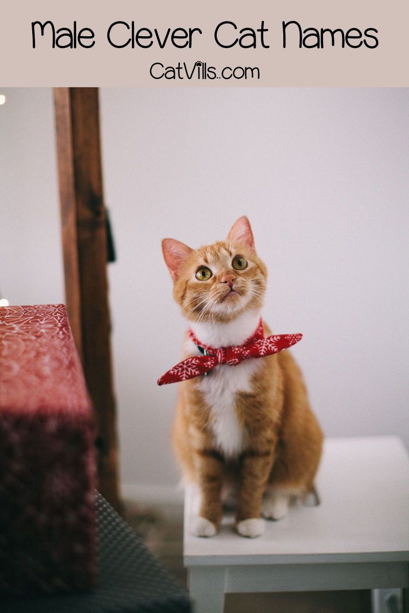 175 Clever And Punny Cat Names Orange Tabby Cats Tabby Cat Orange Tabby