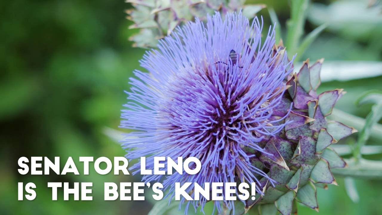 Senator Leno is the Bee's Knees! READ the corresponding