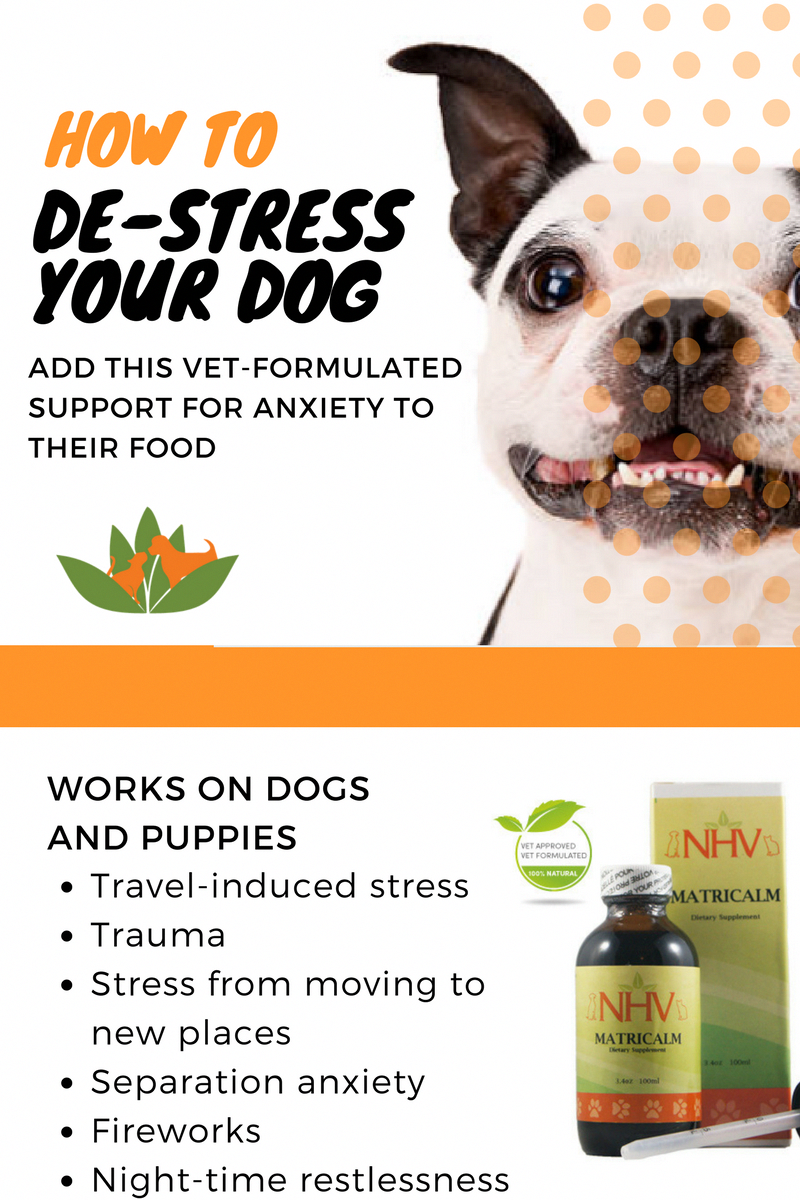 Natural remedy to destress your dog help reduce aggression and