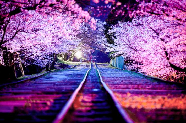 蹴上インクラインの桜写真_京都の観光名所