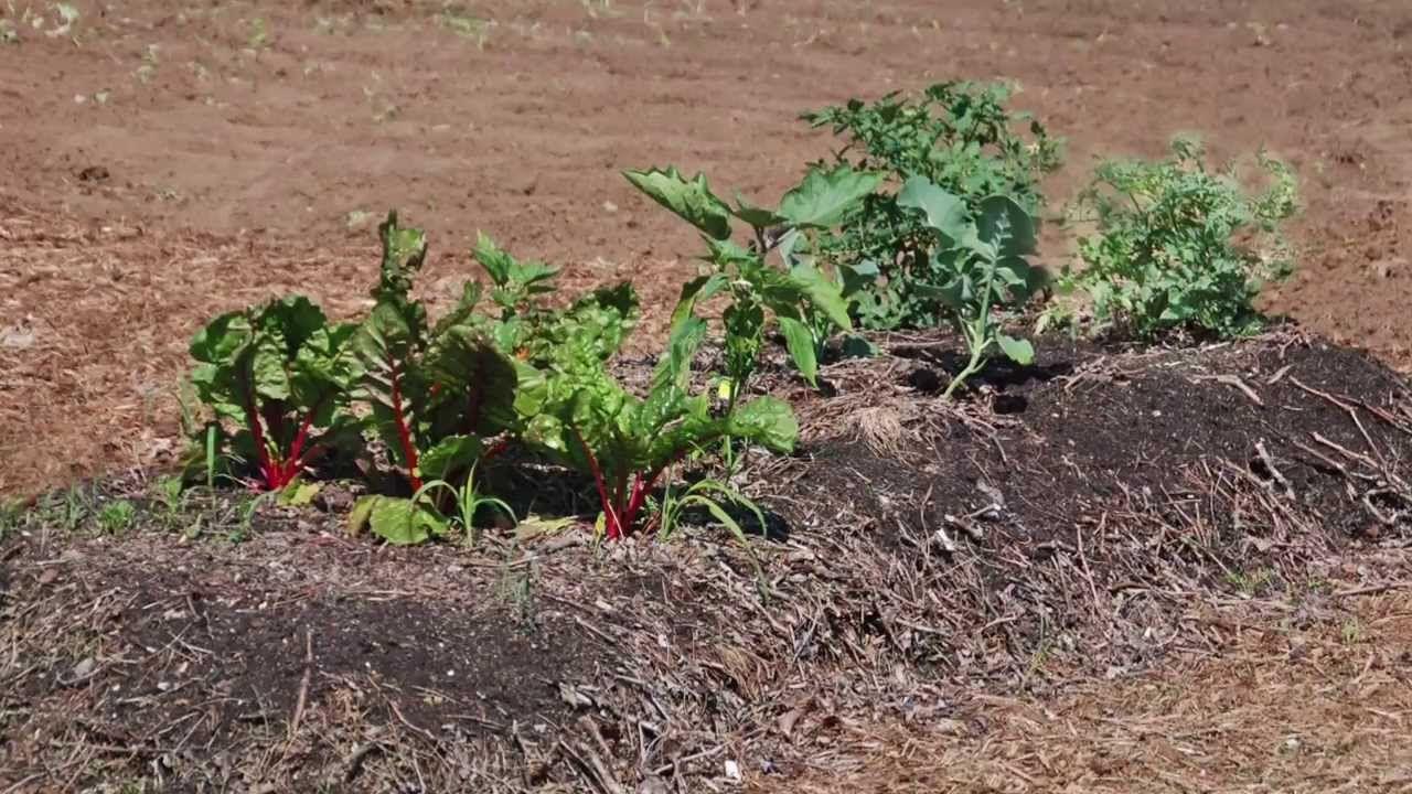 Lasagna Gardening Garden, Garden soil, Peat moss