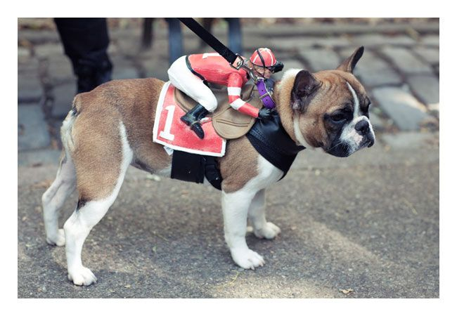 This Would Be Hilarious On Ellie Our Race Horse Dog