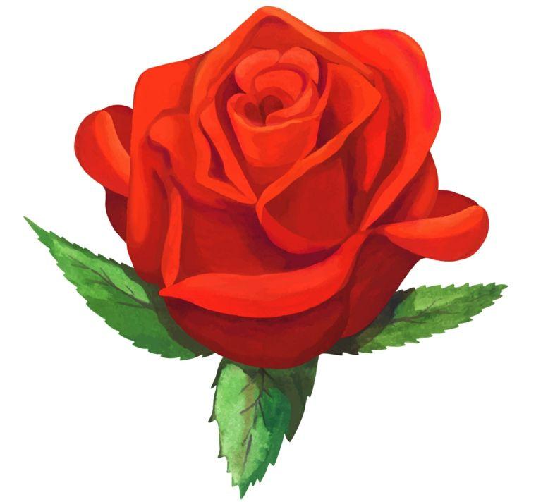 Disegno Di Una Rosa Rossa Tradizionale Con Tre Foglie Verde Idea