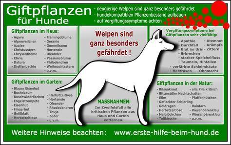 Giftige Zimmerpflanzen Giftige Gartenpflanzen Giftige Pflanzen Hunde Hundehaltung
