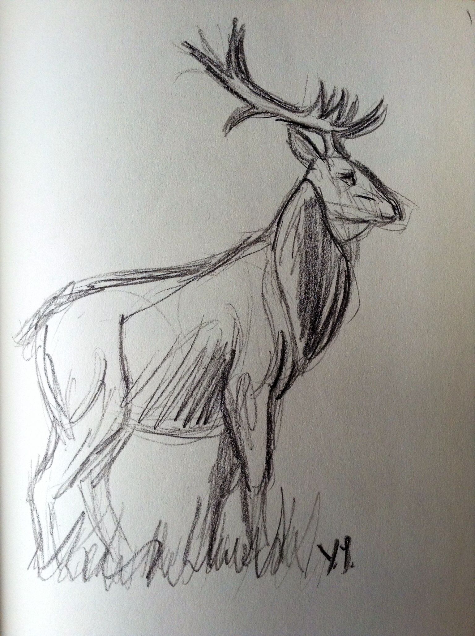 Quick sketch of a deer. By Yenthe J.