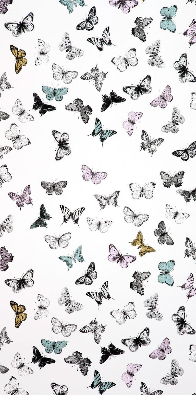 B Utterflies Butterfly Wallpaper Iphone Butterfly Wallpaper