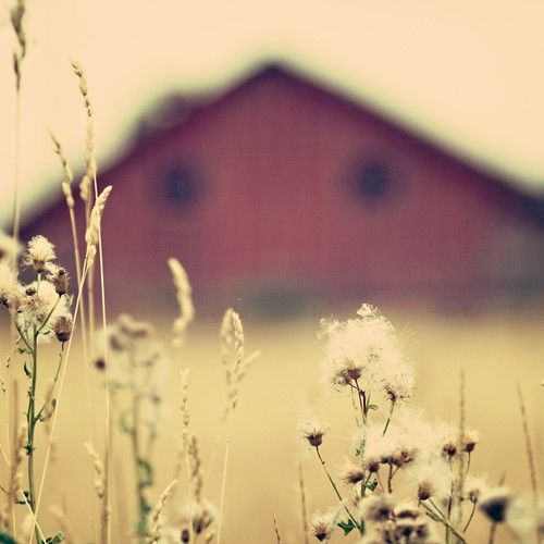 Old red barns are so beautiful  <3