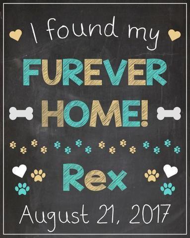 Pet Adoption Announcement Sign Dog Adoption Chalkboard Printable