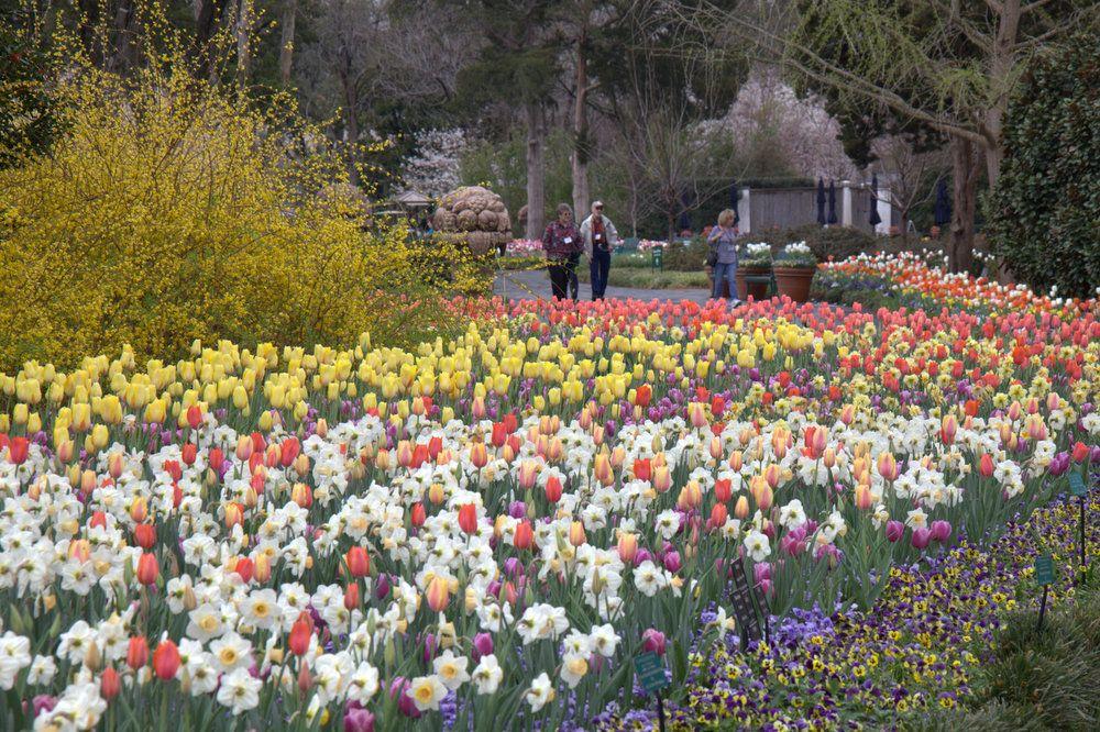 DallasBlooms30, Dallas Arboretum, Dallas Blooms 2014