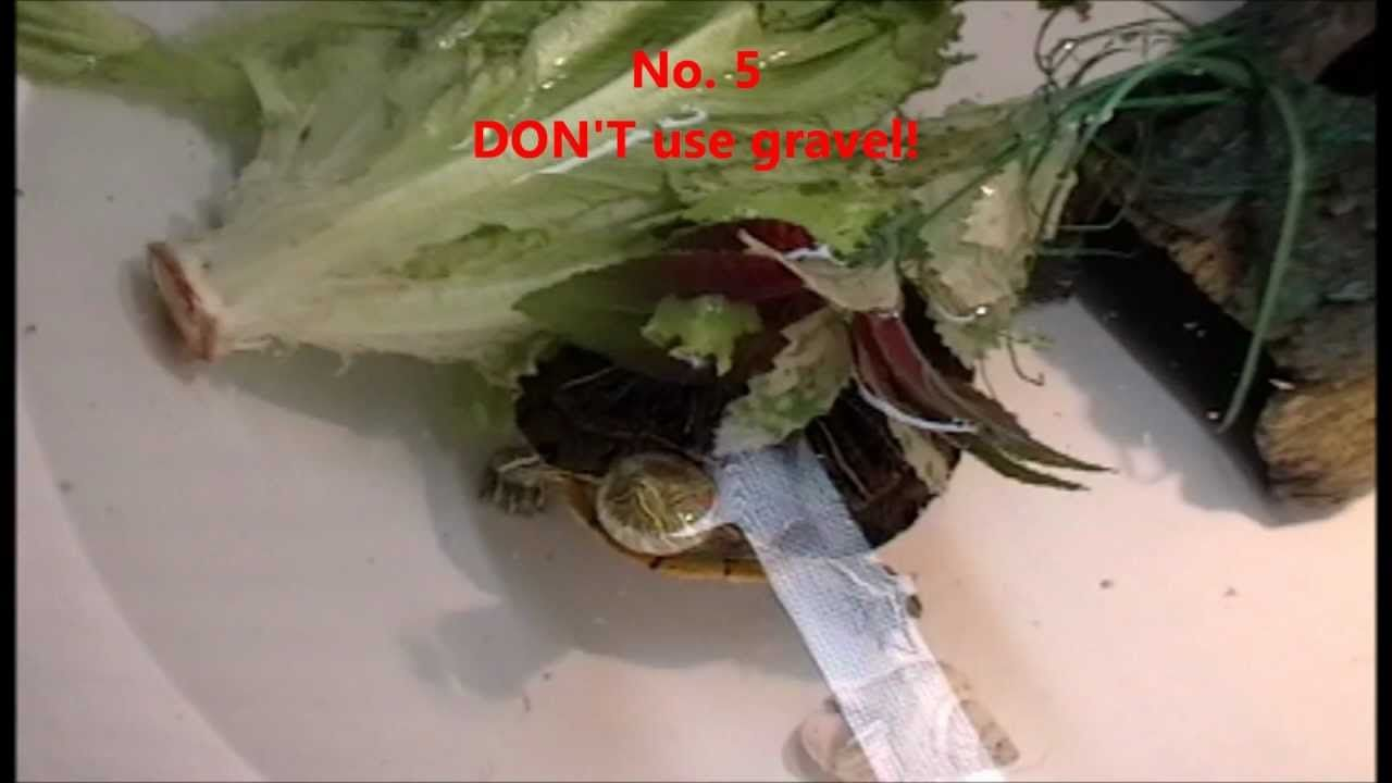 Top 10 DON'TS in caring for a Red Eared Slider Turtle
