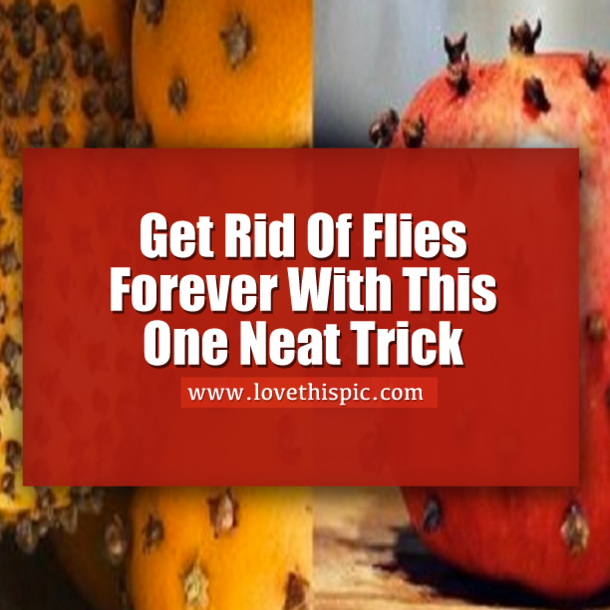 Get Rid Of Flies Forever With This One Simple Trick | Get ...