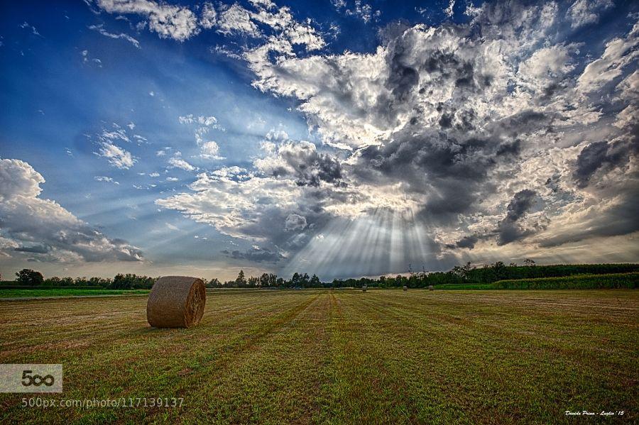 Raggi by MetalDave #nature
