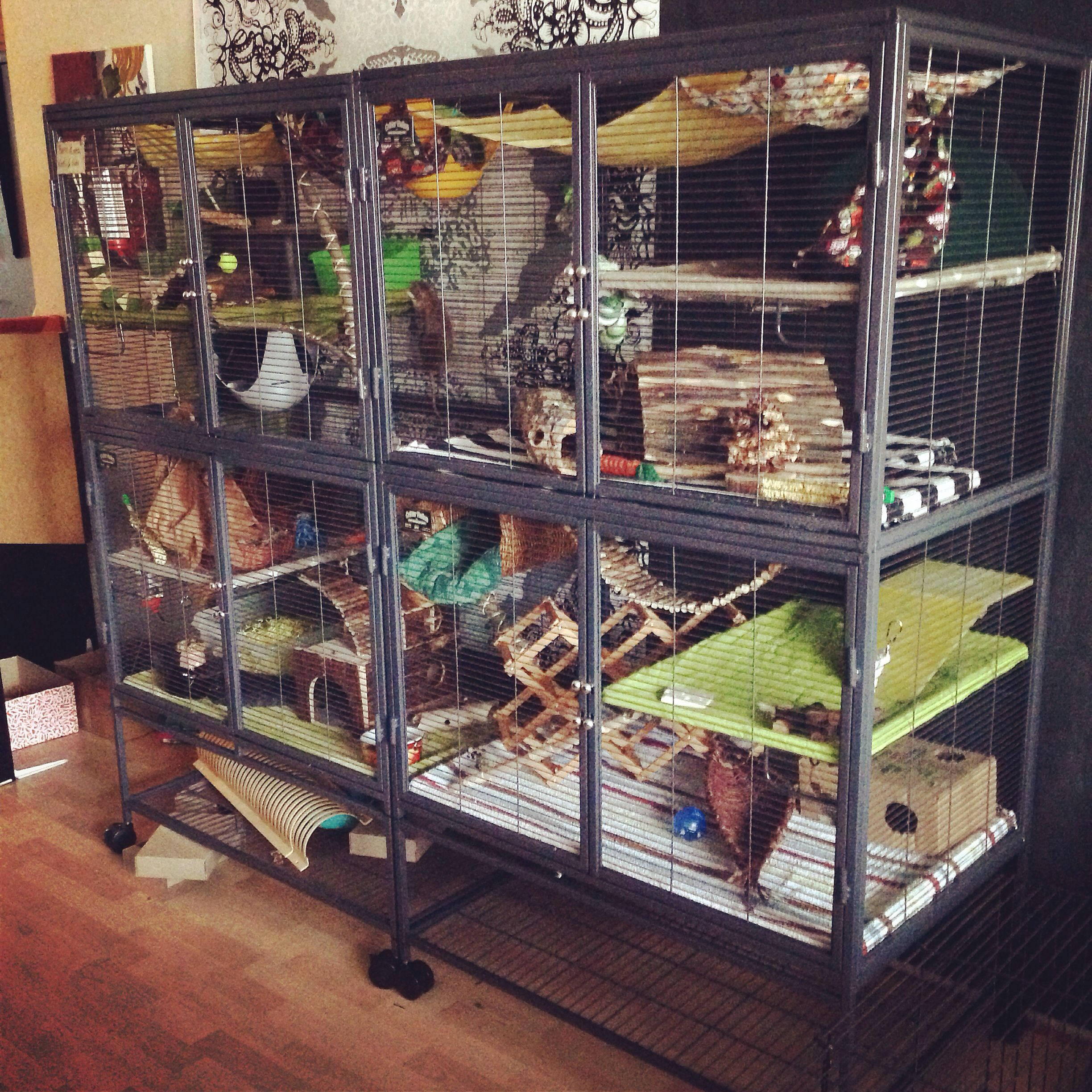 Monster Cage Two Double Critternation Cages Quadcage Diy Oh Dear Neville And Draco Would Love This Ferret Cage Rat Cage Pet Rat Cages