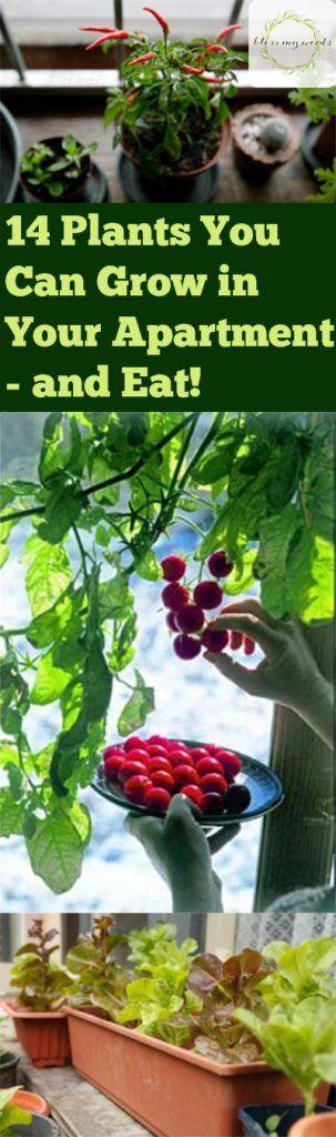 Easy To Grow Vegetables Indoor Gardening