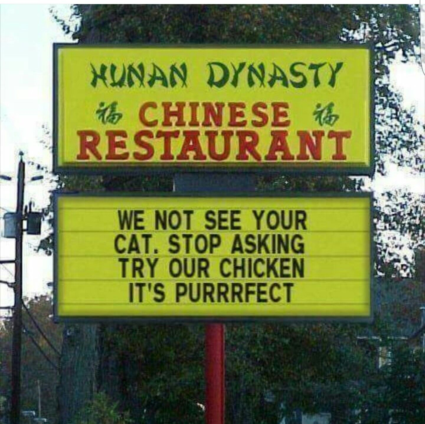 No We Did Not See Your Cat Lol Funny Shit Pinterest Cat - The internet cant get enough of this texan restaurants hilarious signs
