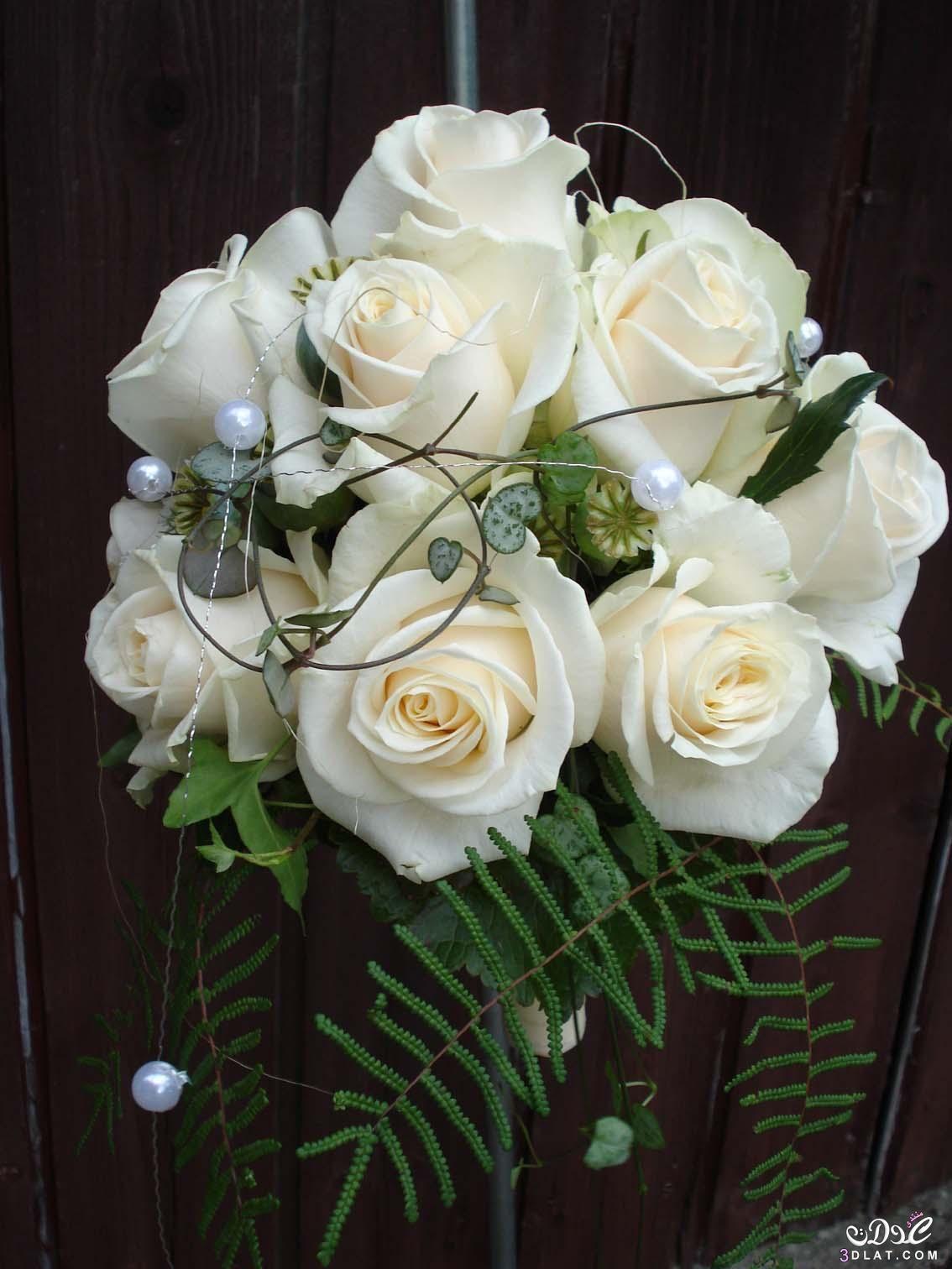 صور ورود بيضاء في غاية الروعة والجمال Spring Wallpaper Home Decor Decor