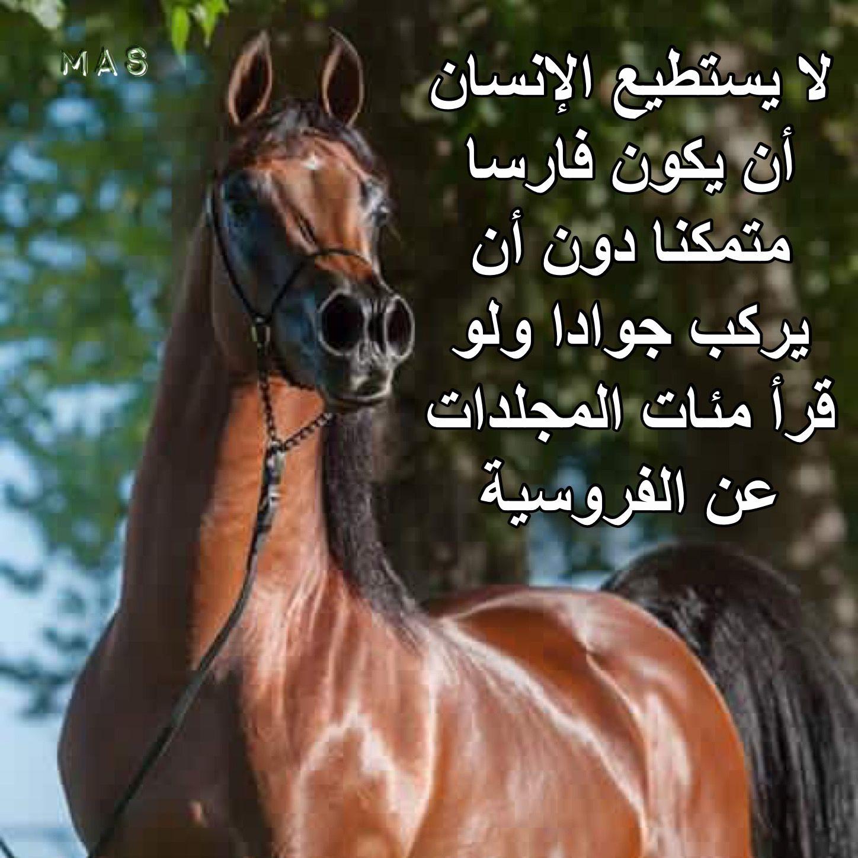 Pin By Mas On الخيل والليل والبيداء Horses Animals