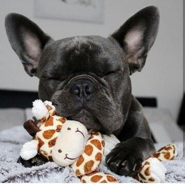 Fotka uživatele Bulldog & Co. love Forever.